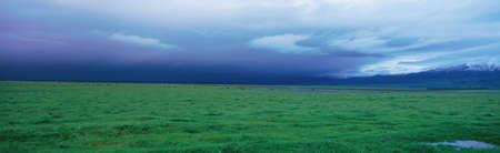 Field of grass under winter storm Stock Photo - 20486784