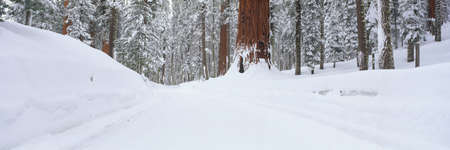 panoramics: Snow covered road through forest