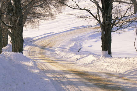 Snowy dirt road with bare trees photo