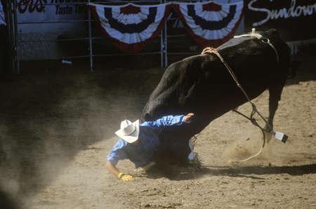 warren: Bull Riding, Earl Warren Fairgrounds, Fiesta Rodeo, Stock Horse Show, Santa Barbara Old Spanish Days, CA