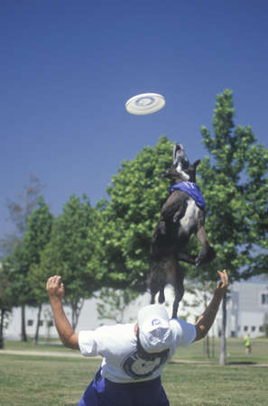 pet photography: Dog and Man playing Frisbee in Canine Frisbee Contest, Westwood, Los Angeles, CA