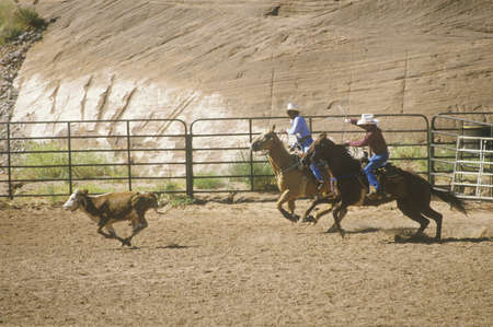 nm: Calf roping, Inter-Tribal Ceremonial Indian Rodeo, Gallup NM