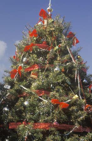 december 25th: Christmas Tree, Los Angeles, California Editorial