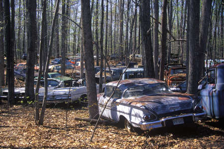 junked: A group of junk cars in a forest off of Route 29 in Virginia