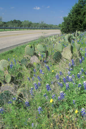Blue bonnets and wild spring flowers along a road in texas stock blue bonnets and wild spring flowers along a road in texas stock photo 20514518 mightylinksfo