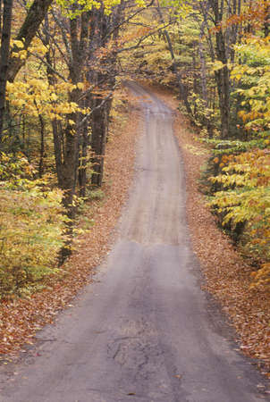 unpaved road: An unpaved road through the woods, Sandwich Notch Road, New Hampshire