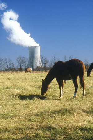 Horse in front of a nuclear power plant