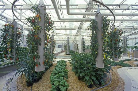 Hydroponische Landwirtschaft im Epcot Center, FL Standard-Bild - 20475550