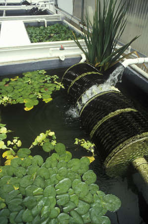 natural sciences: Hydroponic farming at the University of Arizona Environmental Research Laboratory in Tucson, AZ