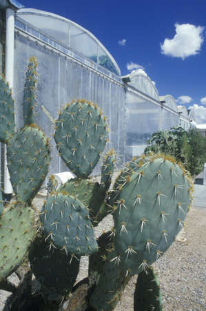 natural sciences: Cacti at the University of Arizona Environmental Research Laboratory in Tucson, AZ