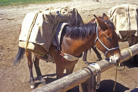 lakeview: Horse tied up ready to be ridden, Lakeview, MT