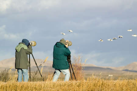 wildlife refuge: Two photographers with telephoto lens photograph Sandhill cranes and snow geese at the Bosque del Apache National Wildlife Refuge, near San Antonio and Socorro, New Mexico