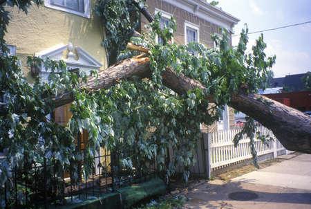 va: Tornado damage, downed tree between two houses, Alexandria, VA