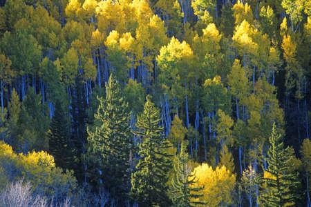 nm: Autumn colors Santa Fe National Park, NM