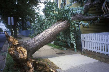 Tornado damage, downed tree between two houses, Alexandria, VA