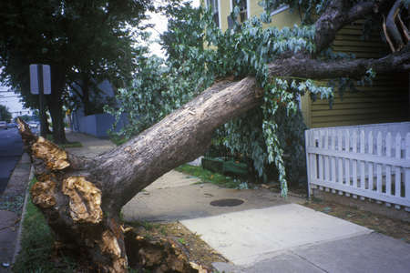Tornado damage, downed tree between two houses, Alexandria, VA