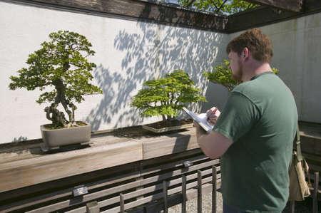 Artist draws Japanese Bonsai tree in National Arboretum, Washington D.C.