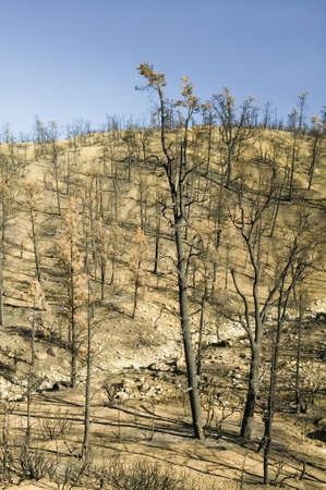 View of fire damage from Day Fire, 2006, along Lockwood Valley Road (near Pine Mnt. and Frazier Park) in Las Padres National Forest, Ventura County, CA