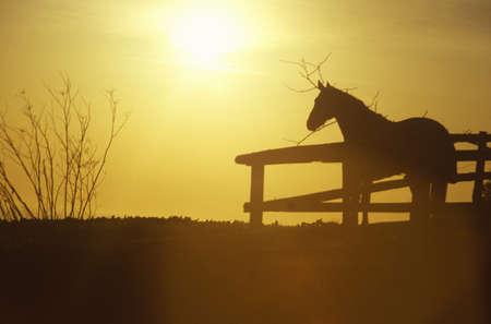 malibu: Horse in silhouette, Malibu, CA