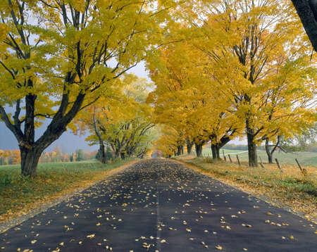 backroad: Peacham, Road in Autumn, Vermont