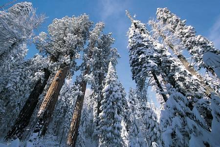 Snow in Sequoia National Park, California