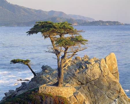 Famous lone cypress along 17 Mile Drive, Pebble Beach, California