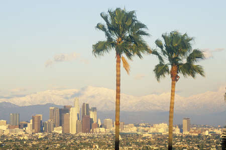 southern california: Two palm trees, Los Angeles and snowy Mount Baldy as seen from the Baldwin Hills, Los Angeles, California