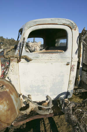 cultural artifacts: Stuffed animal sits in drivers window of deserted truck in field off highway 33, near Cuyama California