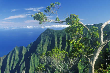 Trees and Mountains on the Na Pali Coast Line, Kauai, Hawaii