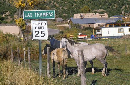 Horses on High Road to Taos, NM