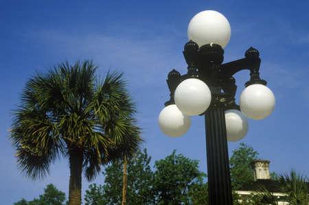 lampposts: Farolas con palmeras en el fondo, Charleston, SC Editorial