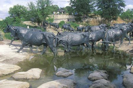 longhorn cattle: Longhorn escultura ganado en Pioneer Plaza, Dallas TX Editorial