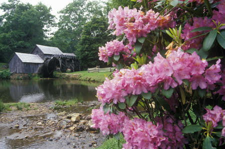 Mabry Mill with flowers in foreground on Blue Ridge Parkway, VA