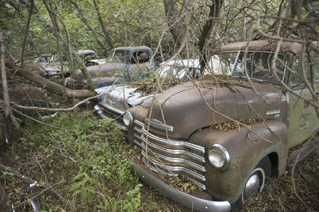 New Chevrolets and 1960's cars never before run rotting in farm field near Norfolk, Nebraska