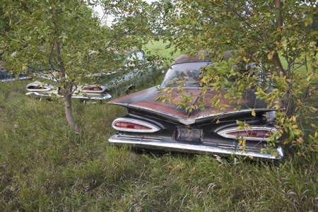 junk: 1959 Chevie with new Chevrolets and 1960s cars never before run rotting in farm field near Norfolk, Nebraska