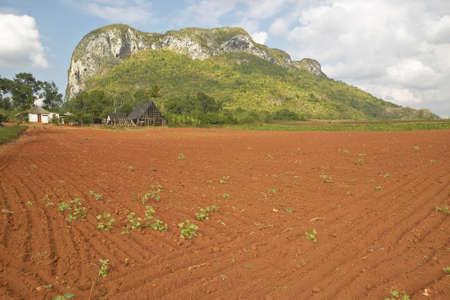 Campo de la granja con la tierra roja con las montañas de piedra caliza en el Valle de Viales, en el centro de Cuba Foto de archivo