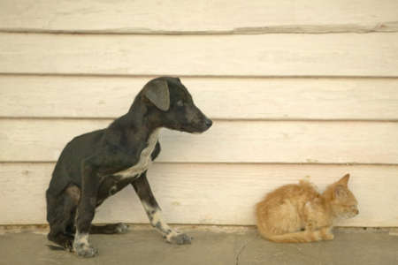 Gatito y el perrito flaco en el Valle de Viales, en el centro de Cuba