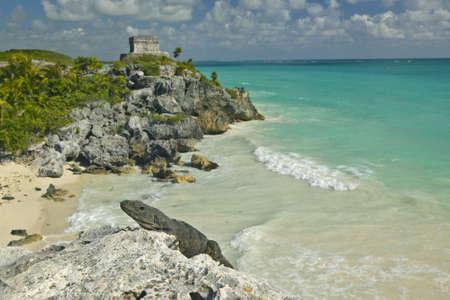 Close-up on Lizard with background of Templo del Dios del Viento Mayan ruins of Ruinas de Tulum (Tulum Ruins) in Quintana Roo, Yucatan Peninsula, Mexico Stock Photo - 20608773