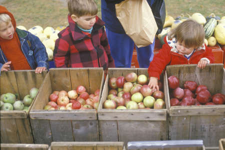 Children selecting apples in New England on Halloween