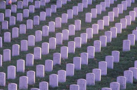 一排排墓碑,阿灵顿国家公墓,华盛顿特区