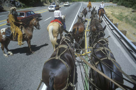mule train: View of team of horses in wagon train during reenactment near Sacramento, CA