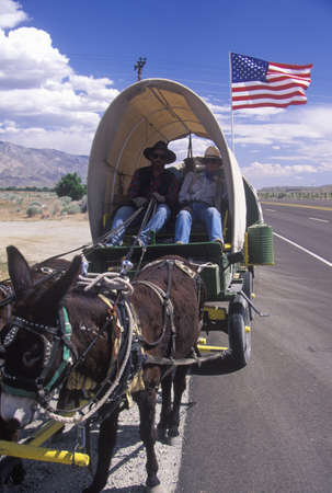 ca: Mule team and wagon on freeway near Bishop, CA