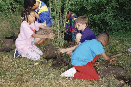 Kinderen planten bomen Redactioneel
