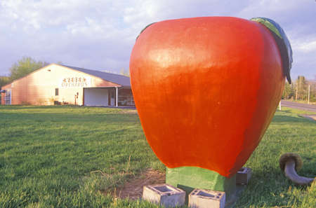 advertise with us: Giant statue of a ripe, red Tomato in field, WI