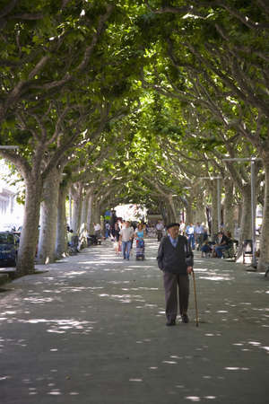 Older man walking with cane down tree-lined sidewalk in La Seu dUrgell, (Sa Seu dUrgell) in Catalunya, Spain