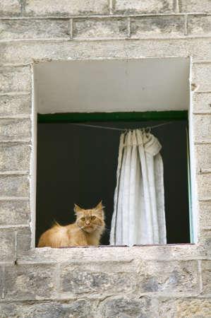 スペイン、バルセロナのゴシック地区のウィンドウの中の猫
