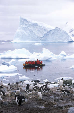 Ecological tourists in inflatable Zodiac boat observe Gentoo penguins in Paradise Harbor, Antarctica Редакционное