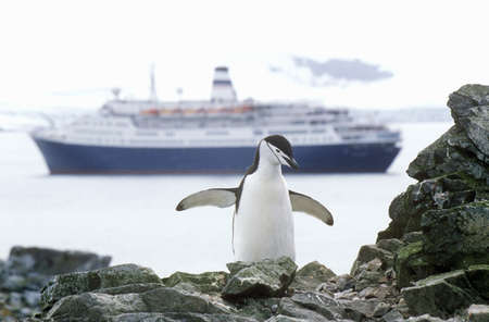 sightseers: Cruise ship Marco Polo and Chinstrap penguin (Pygoscelis antarctica) at Half Moon Island, Bransfield Strait, Antarctica