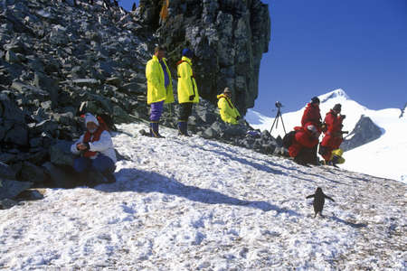 photographies: Ecological tourists observing Chinstrap penguins (Pygoscelis antarctica) on Half Moon Island, Bransfield Strait, Antarctica
