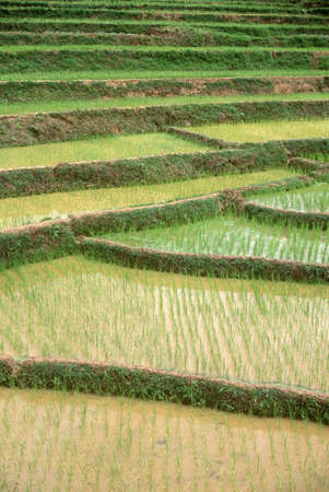 irrigated: Terraced rice paddies in Kunming, Peoples Republic of China Editorial